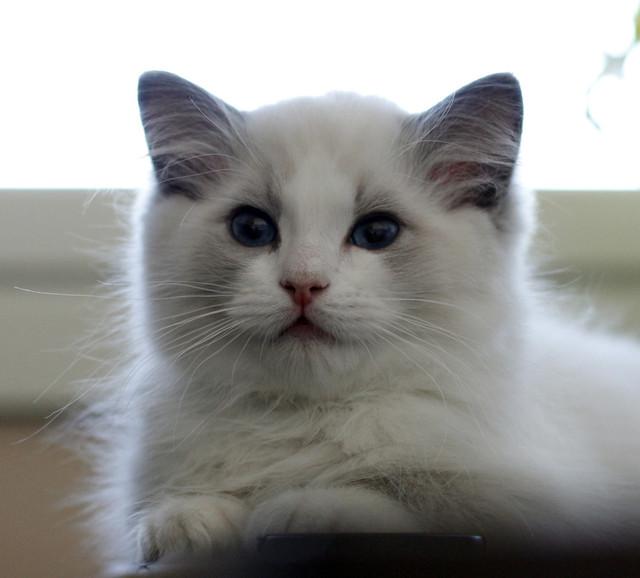 Smoothie 3,5 months