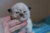 Gwen 2,5 weeks