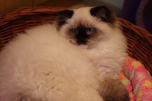 Gwen 4,5 months