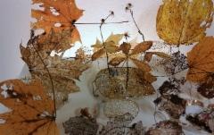 Kultapuutarha / Golden Garden 2019