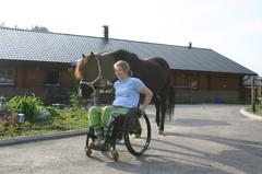 Hevosen taluttaminen onnistuu myös pyörätuolinkäyttäjältä