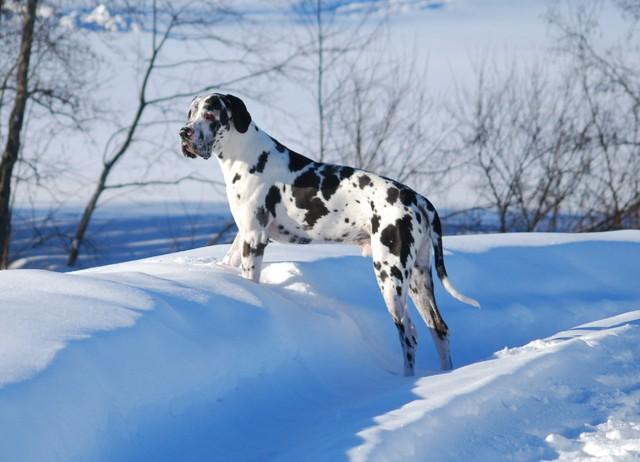 Talven ihastelua!