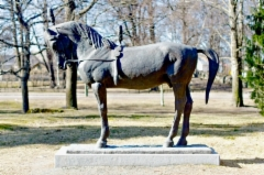 Sirkushevonen, Rauma