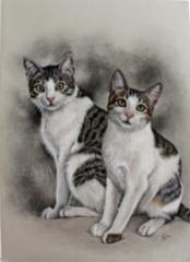 Kissakaverit