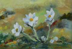 Spring pasque flowers, 2011, oil on canvas, 55 x 38 cm