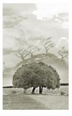 Laajennettu Puu, mustesuihkuvedos paperille, 40x30cm, sarja 1-20, vedos 230 €, kehystettynä (50x40cm) 330 €, v. 2014, Johanna Pohjavirta & Tuomo Rosenlund