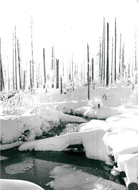 Snowy landscape of Kollaa.