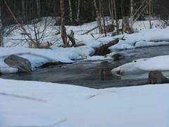 talvinen puro
