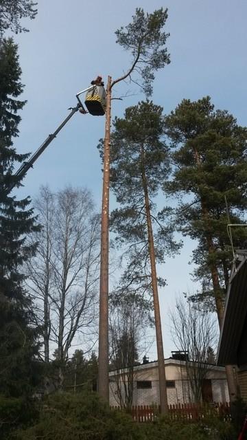 puidenkaatoa_nostokorista2