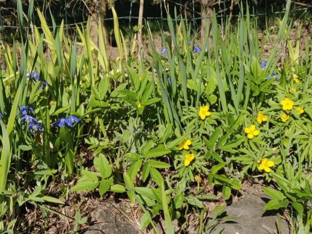 kevät kukat