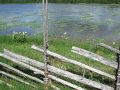"""""""Järvi, lumpeet ja riukuaita"""""""