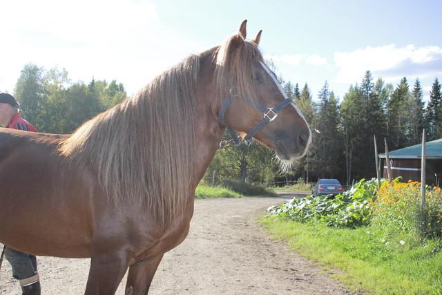 Upea hevonen