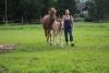 Maria hakee hevoset