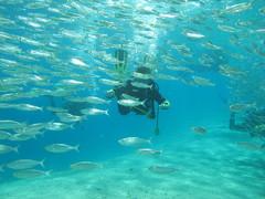 keskellä upeaa kalaparvea