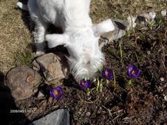 Nyt on kevät