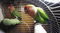 Coco ja Tilde