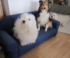 Sally, Lady ja Minnie