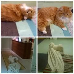 Saffran kissa - Rockyllä aina oma peite mukana!