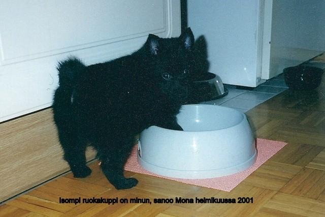 Mona ja ruokakippo 02.2001