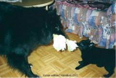 Leikkikaverit Bella ja Mona 02.2001