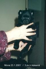 Mona 23.1.2001