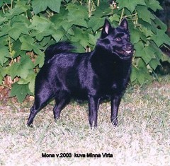 Mona v.2003   kuva Minna Virta