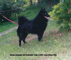 Huvi-Tuulen Tuittu v.2003   kuva Minna Virta