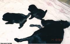 Monan pennut 14.10.2003  14pv.