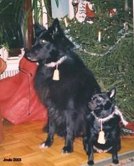 Joulu v.2003  Bella ja Mona