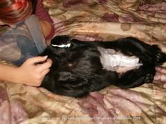 Monan leikkaushaava 29.11.2004