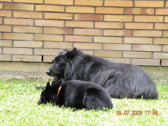 5.7.2009  Mata ja Bella-belggari