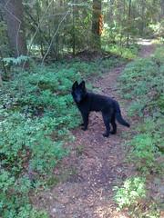 06.08.2012 Rita metsässä