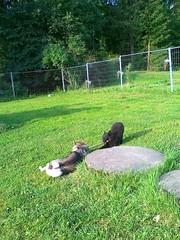 08.07.2012 Hukka leikkii Ritan kanssa