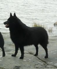30.7.2012 Mata rannalla  kuva Minna  Virta