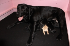 img_6097_pups_2nd_day