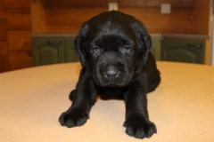 img_7442_lower_back__male_5_weeks_4_days_9.2.2018