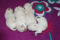 img_2317_bex_pups_4th_day