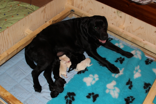 img_4186__gracie_pups_1_day