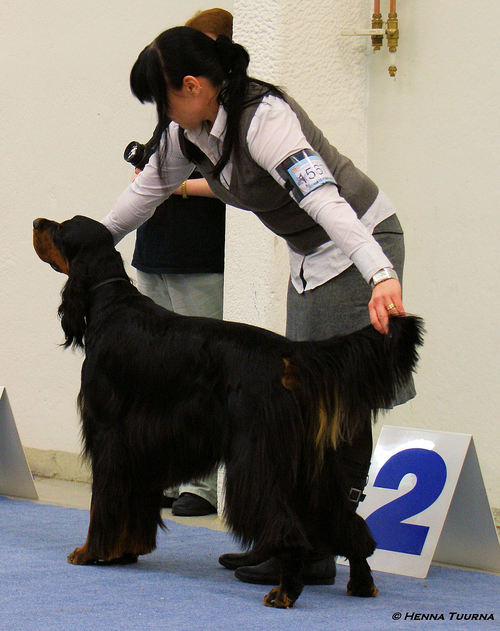 turku_winter_dog_show_kv_23.1.10_037.jpg