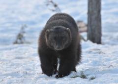 talviahma,kuvaaja Jarmo Kauppinen