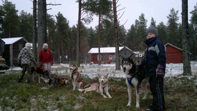 5.12. Kniivilässä koiravaljakko odottaa lunta