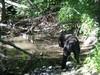 Vielä puro solisee