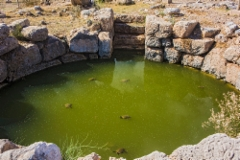 09._26th_october_2017._kato_zakros._turtles_living_in_the_well_of_minoan_palace_about_from_the_year_1900_b.c.
