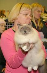 Kissanäyttelyssä