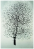 Huurteinen paju, serigrafia 28 x 40 cm, vedoksia 30 kpl. Hinta 250 €