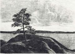 Tuulen tuivertama, puupiirros 29 x 21 cm, vedoksia 5 kpl. Hinta 150 €