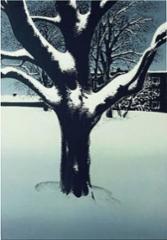 Luminen puu, serigrafia 28 x 40 cm. Loppuunmyyty.