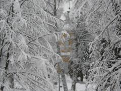 Lumisten puiden takaa pilkistää kellotapuli