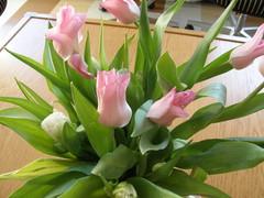 Tulppaanit tekevät kevään, Heinolatalossakin