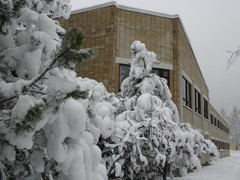 Lumiset vuorimännyt talon päädyssä